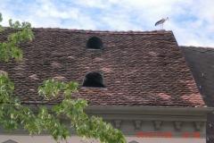 Storch am Dach